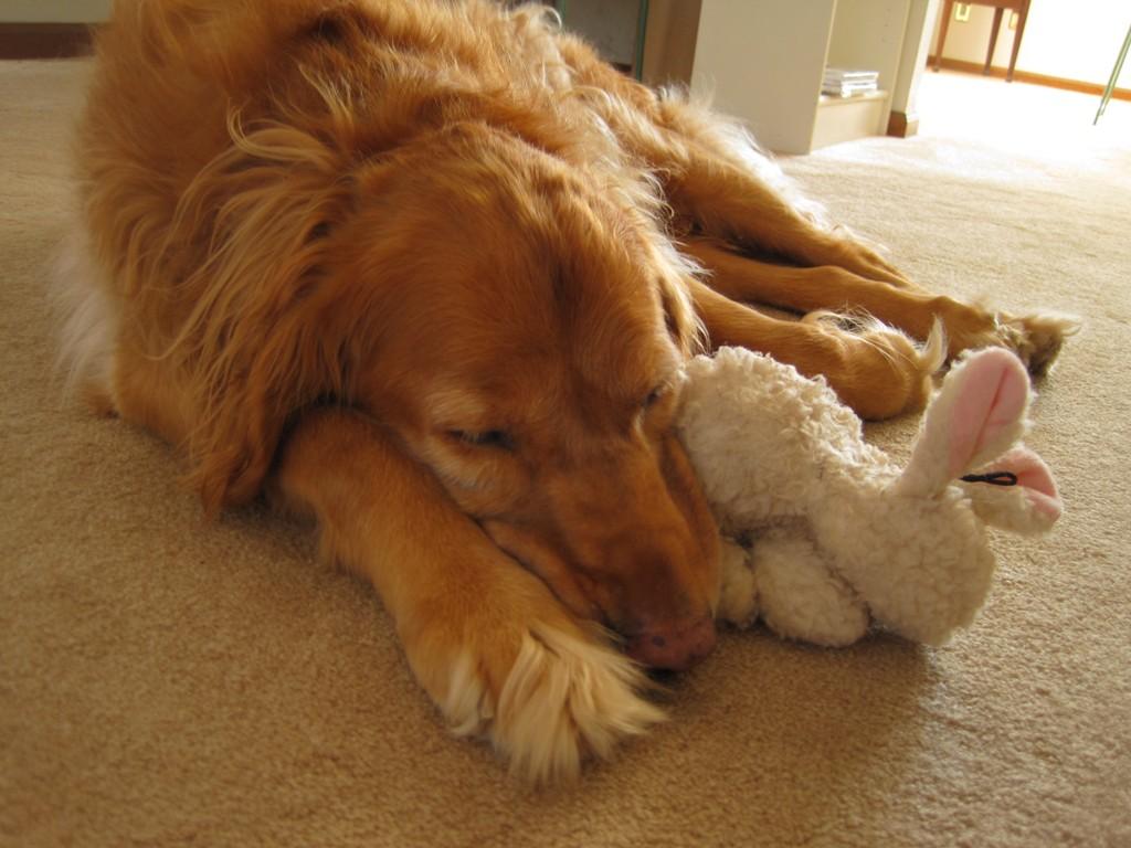 Boomer & His Bunny